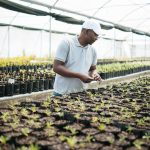 Spier Produce Gardens to boost community food security during lockdown