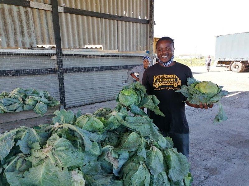 SA Harvest