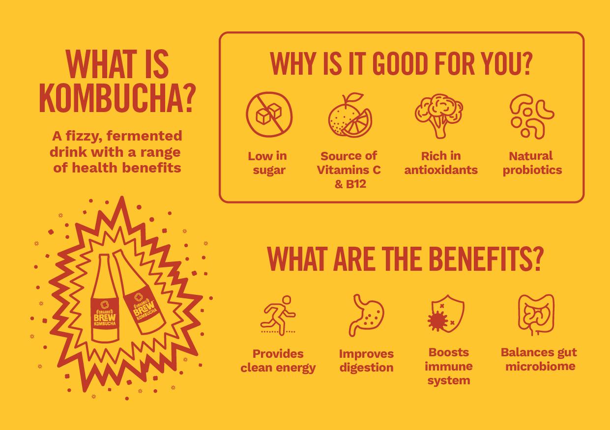 beverage kombucha for beginners infographic media